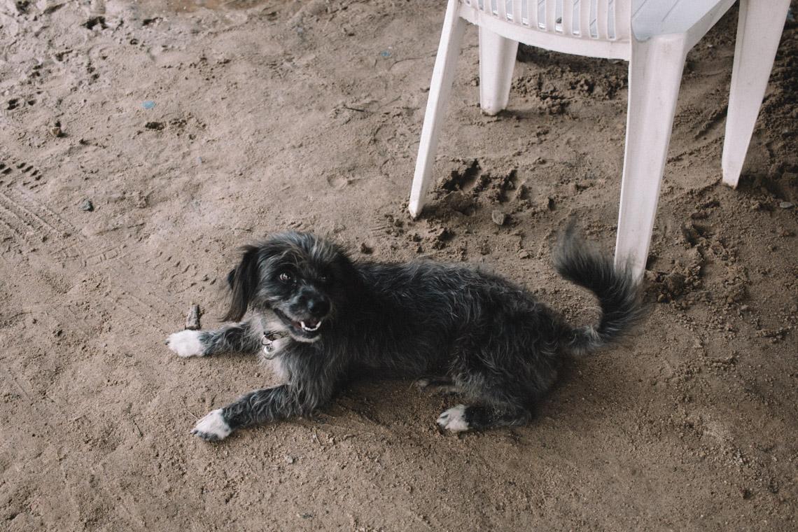 annalaurakummer-vier-pfoten-koh-chang-hunde-13-2