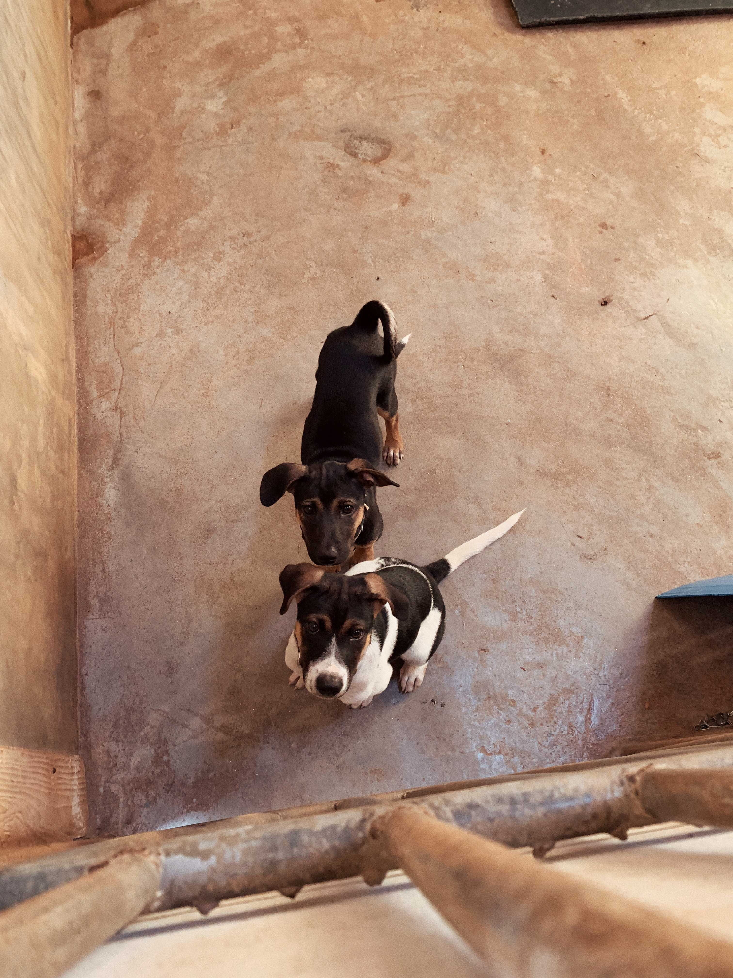 annalaurakummer, hund, thailand, ellie, adopt, lanta animal welfare