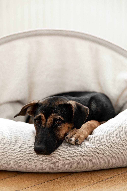 annalaurakummer, ellie, hund, thailand, adoptiert